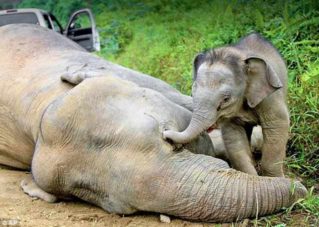 Baby Elephant Has Found a New Mum