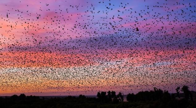 8 million bats descend on, hover over, and cram into 2.5 acres