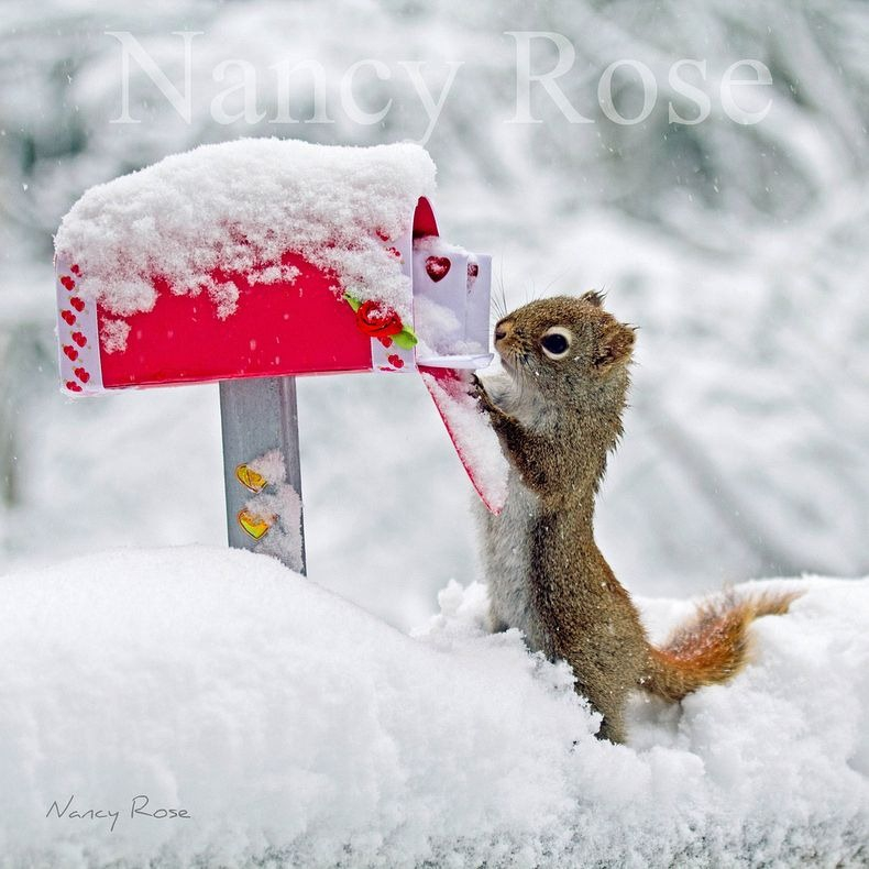 Nancy Rose's Adorable Squirrels