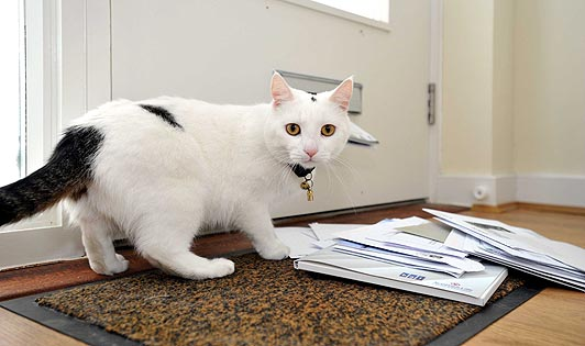 10) Belgians have tried to deliver mail using cats. It didn't work.