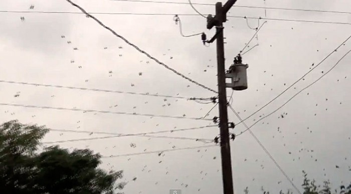 It's raining spiders in Brazil