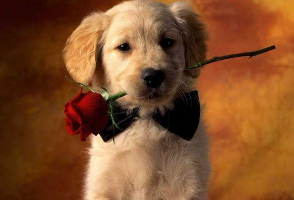 Will You Be My Valentine?:)
