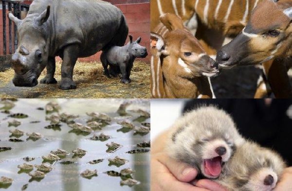 Baby Animals From Around The World