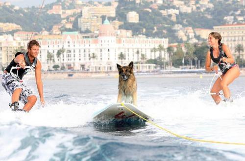 Dogs Love Extreme Water Sports Too! от Marinara за 14 feb 2013