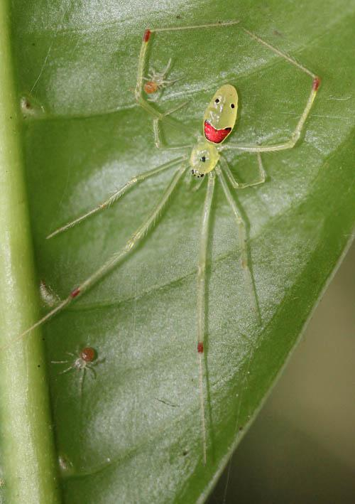 Look at This Happy Spider!