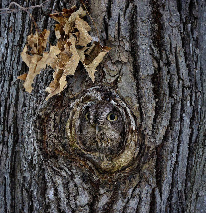 Creepy Pictures of Owls Hiding in a Tree от Marinara за 15 feb 2013