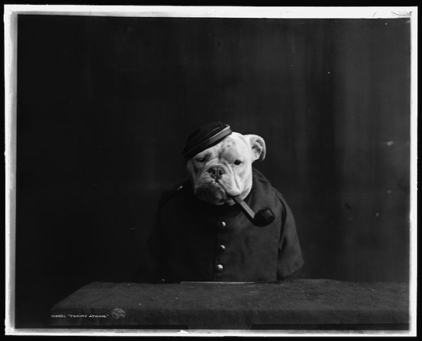 Peculiar Vintage Photos Of Dogs Dressed As Humans