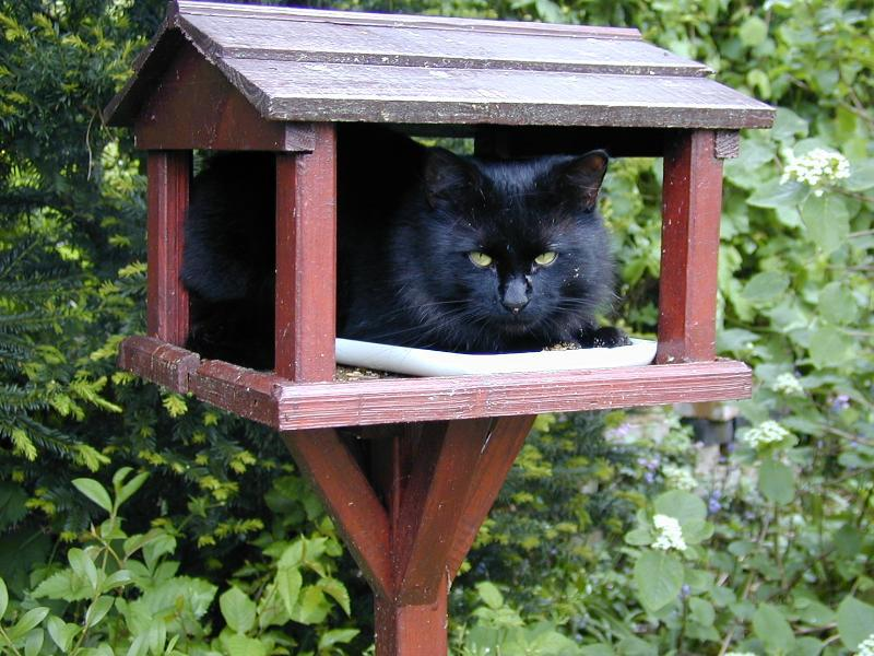 Cats and Bird Feeders