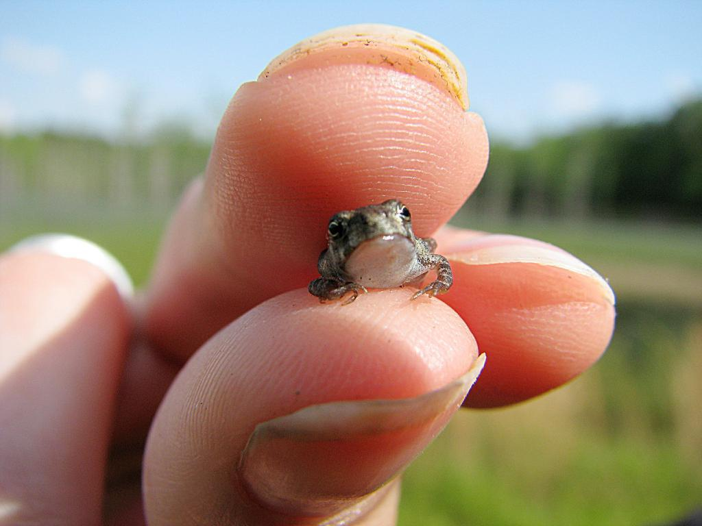 The Cutest Frog Ever