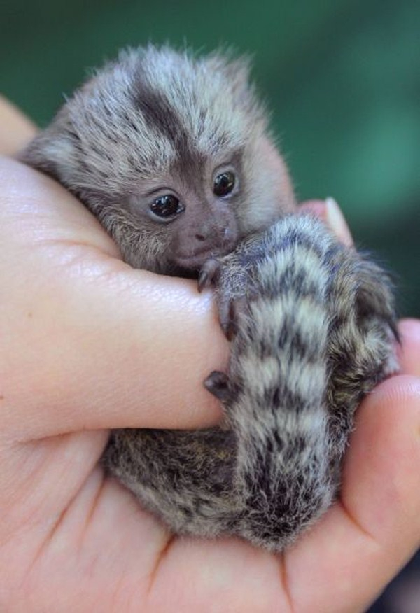 Lets Get Warm And Fuzzy With These Adorable Baby Animals.