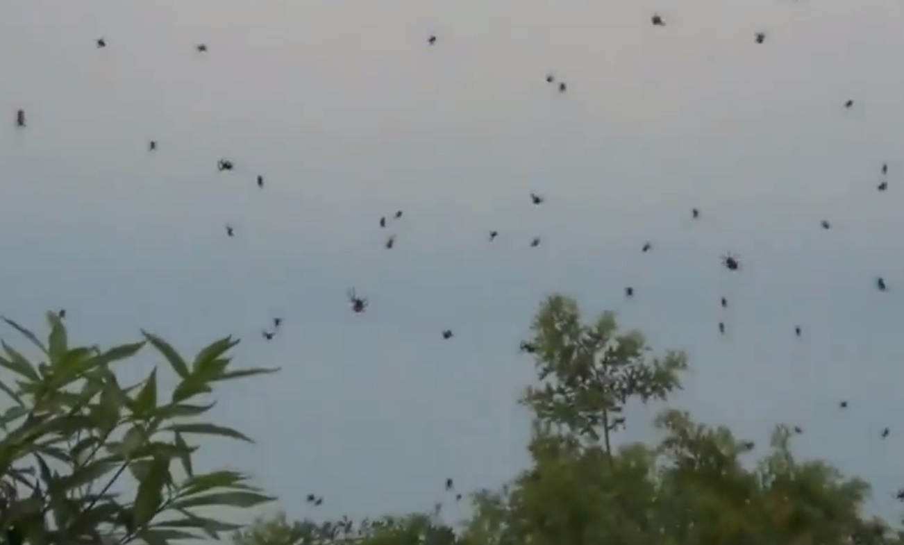 1000 Of Spiders Are Raining Down On People In Brazil!