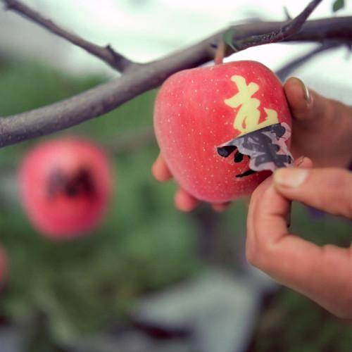 Tattooed Apples Is a New Trend Asia