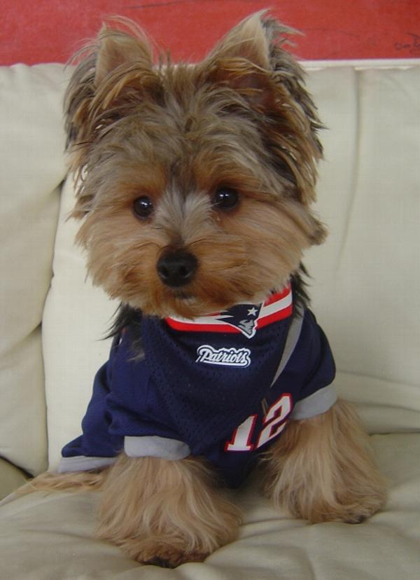 Dogs in Football Jerseys! How Cute