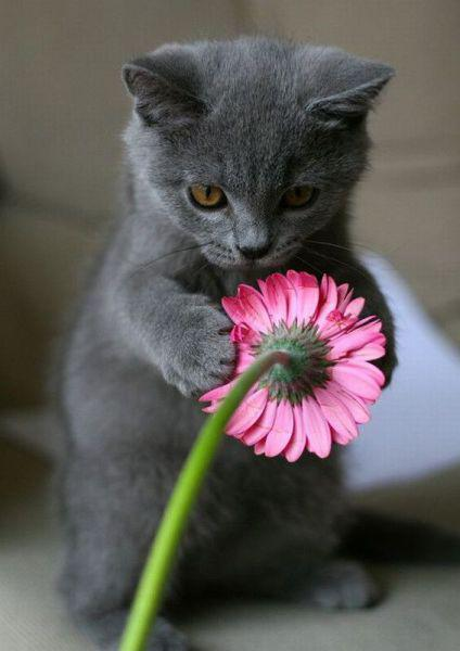 I Brought These Flowers Just for You