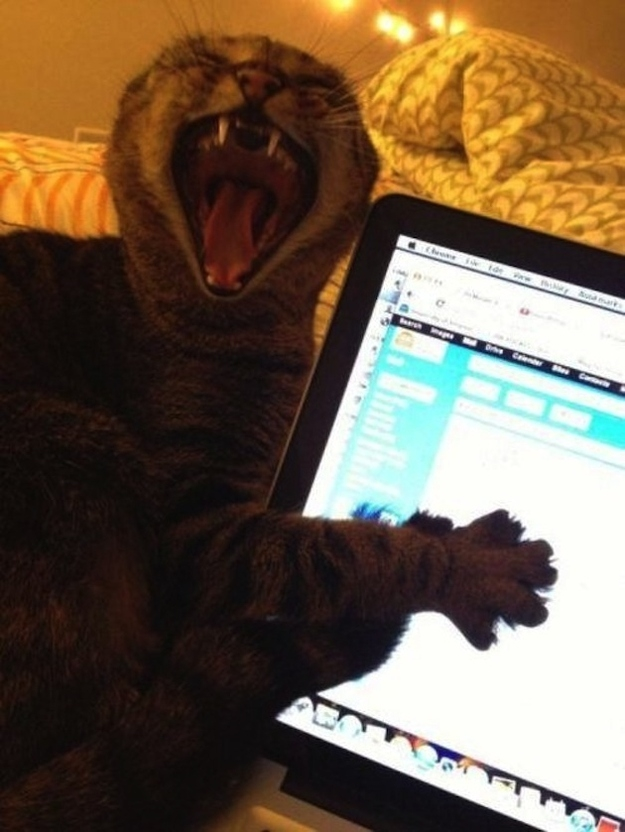 This cat who needs you to chill with the checking Gmail every five seconds.