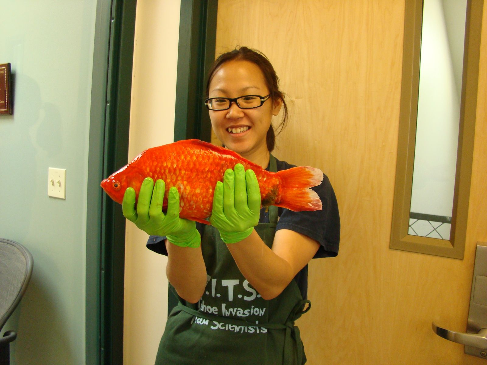 Monster Goldfish Threaten Lake Tahoe!
