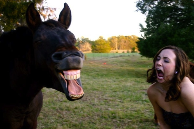 The Best Faces Horses Make