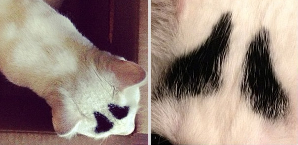 Meet Sam, The Cat With Eyebrows
