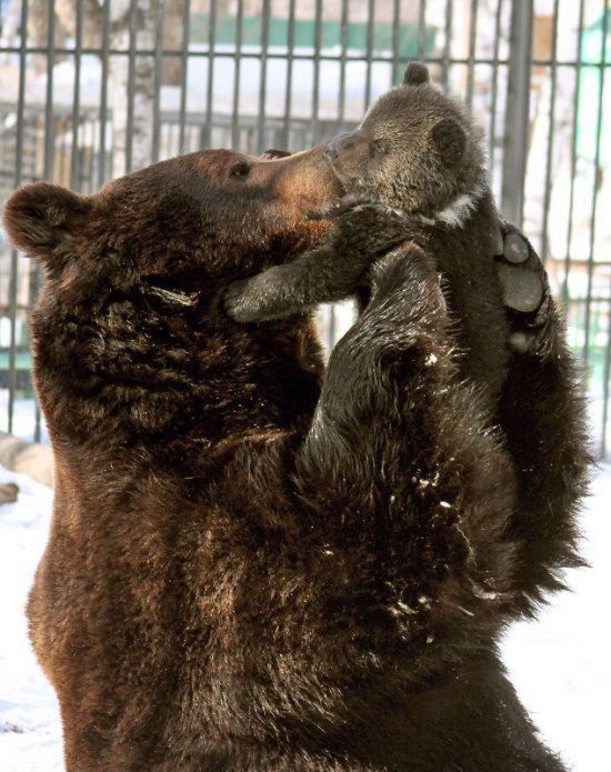 The Bear Love