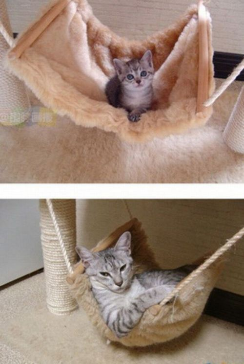 Every Kitten Becomes A Cat