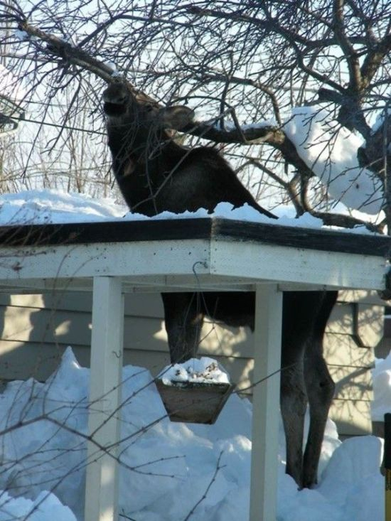 This Bird Feeder Is Not For Birds Only