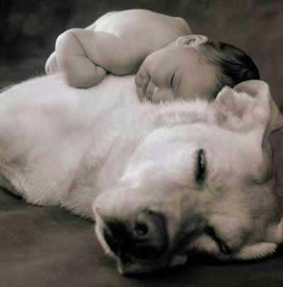 Dog is a Baby's Best Friend