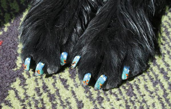 Manicure Your Dog! It's Fun! от Marinara за 04 mar 2013
