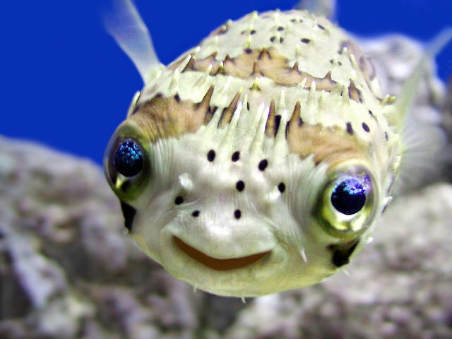 Funniest Fish on the Web