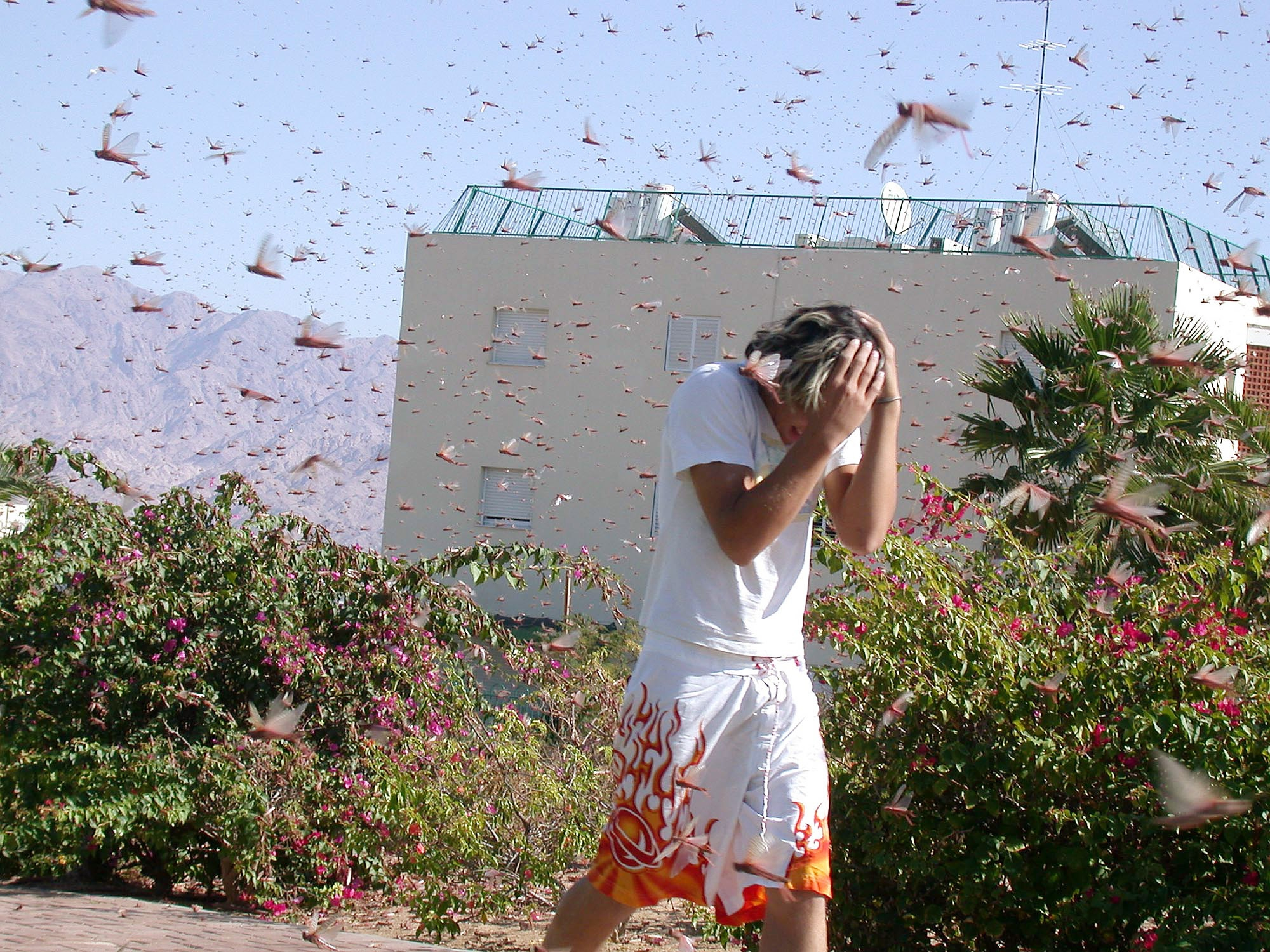Huge Swarms Of Locusts Are Taking Over Israel!