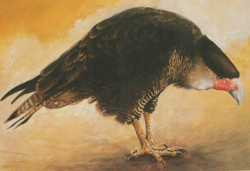 Awesome Animals We Let Go Extinct