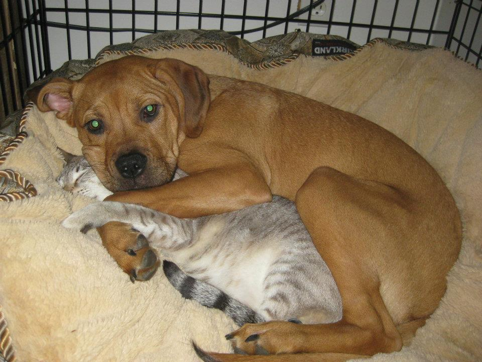 Lets Get Inspired With These Beyond Adorable Cuddling Animals!