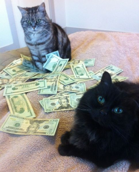A Few Very Wealthy Cats