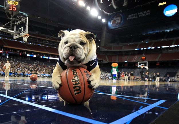 10 Most Common College Mascots