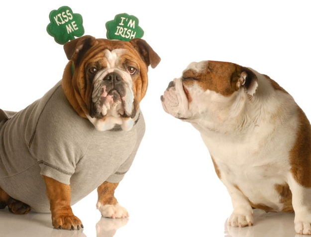 Reasons Why St. Patrick's Day Is Best Holiday Ever