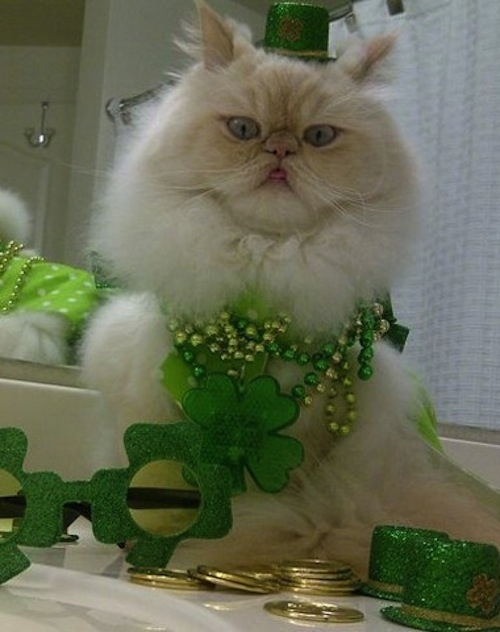 These Cats Are Ready For St. Patrick's Day