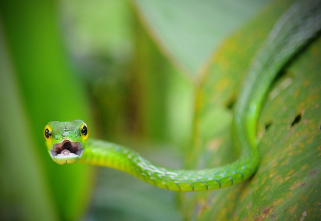 These Snakes Are Not Looking Forward To St. Patrick's Day