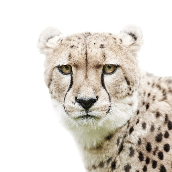 More Up Close and Personal Animal Portraits