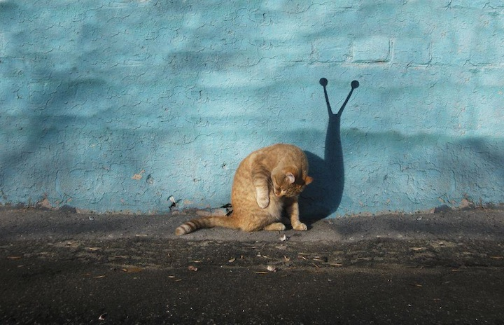 Cute and Clever Street Art of Alexey Menschikov