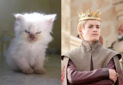 Game of Thrones Characters and their Cat Doppelgangers
