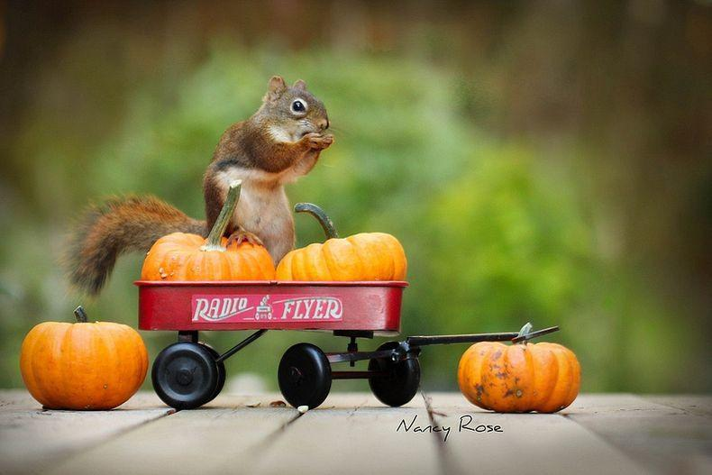 Squirrel in Everyday Life