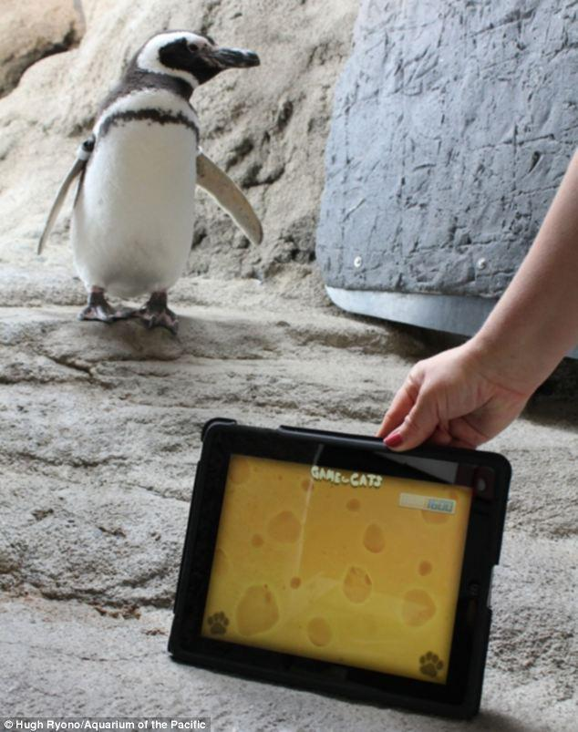 Penguins Like Technology