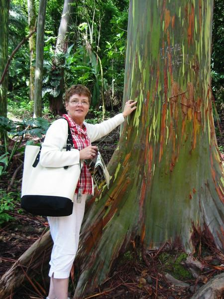 Tourist Next To Rainbow Eucalyptus Tree