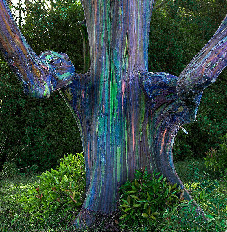 Cool Tie Dye Tree