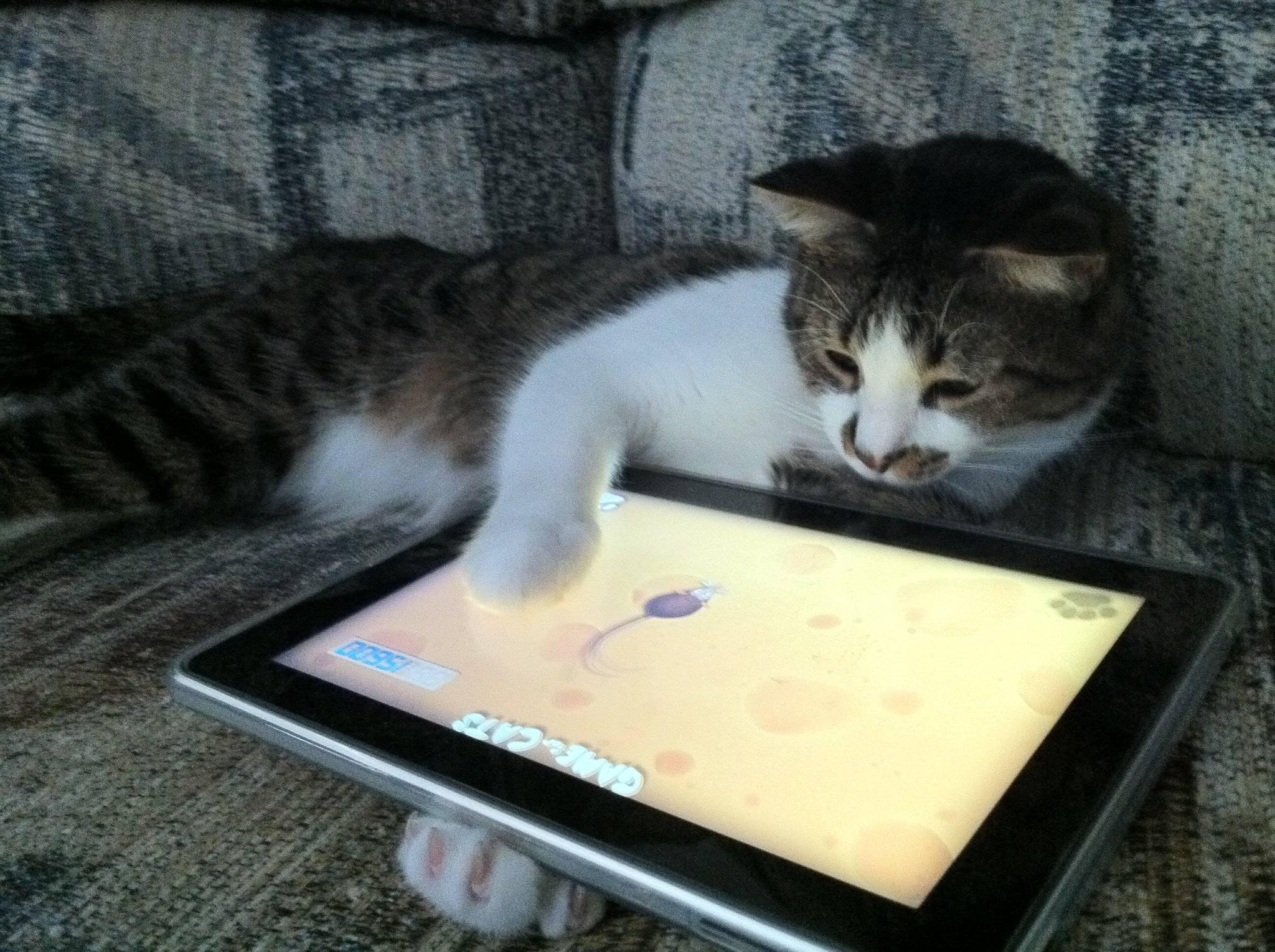 Cats And Technology