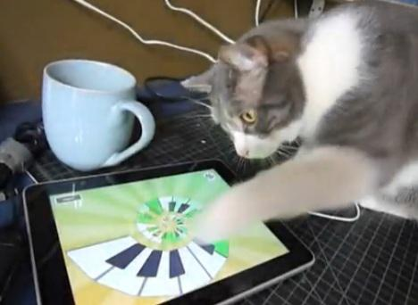 Fun Ipod Games For Cats