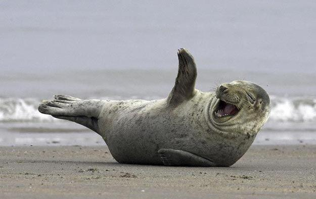 Funny Seal