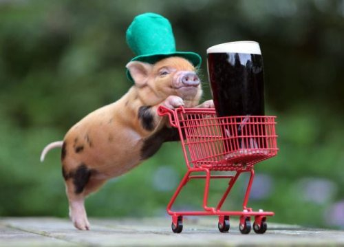St. Patrick's Day Pig