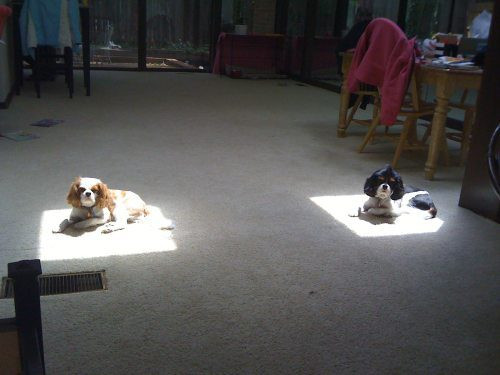 Dogs Enjoy Sunshine