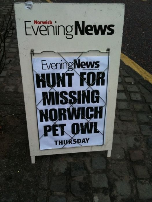 Missing Norwich Pet Owl