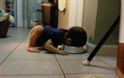 Baby Eating Out Of The Dog Bowl